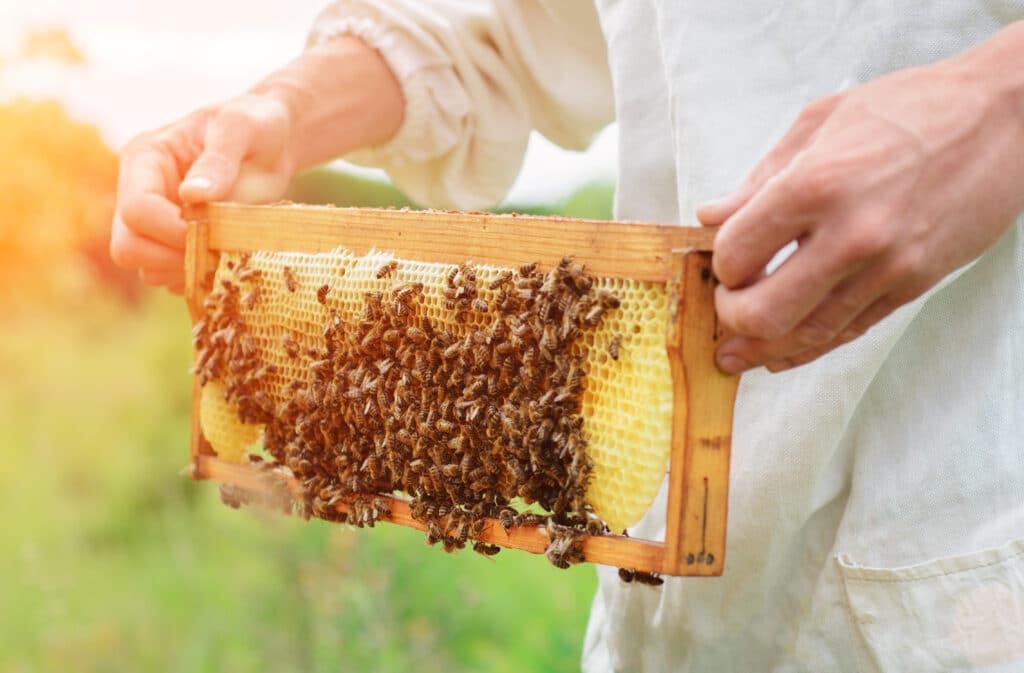 Propoliss jeb bišu līme pret vīrusiem
